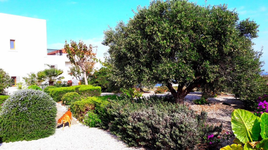 Luxury-property-in-Stavros-Akrotiri-Chania-Crete-for-sale-with-garden-6e5386bb